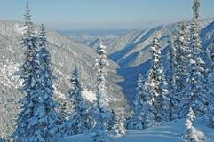 冬天森林贝加尔湖 免版税库存图片