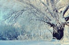 冬天森林晴朗的场面在与冬天软的阳光的早期的冬天早晨 冬天风景场面 库存图片