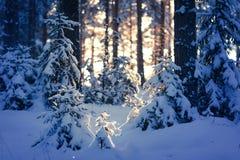 冬天森林 图库摄影