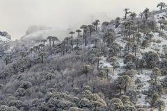 冬天森林 免版税图库摄影