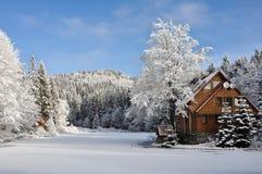 冬天森林 免版税库存照片