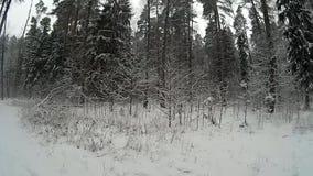 冬天森林 影视素材