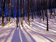 冬天森林1 免版税图库摄影