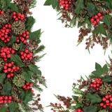 冬天植物群边界 免版税库存照片