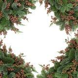 冬天植物群边界 图库摄影