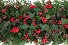 冬天植物群 免版税图库摄影