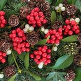 冬天植物群 库存照片