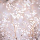 冬天植物背景 免版税库存照片