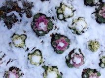 冬天植物 库存照片