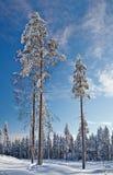 冬天横向。 用雪包括的冬天木头。 库存照片