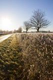 冬天横向。 图库摄影