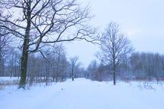 冬天横向在公园 免版税库存图片