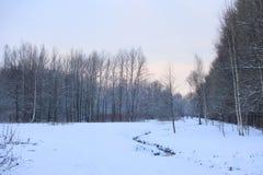 冬天横向在公园 库存照片