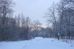 冬天横向在公园 免版税库存照片