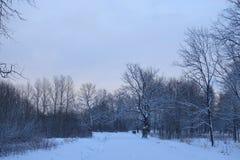冬天横向在公园 免版税图库摄影