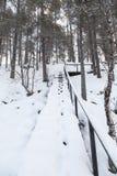 冬天横向在拉普兰,芬兰 免版税库存照片