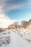 冬天横向在荷兰语国家公园Veluwe 库存图片