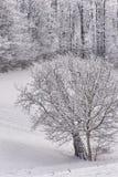冬天横向 免版税图库摄影