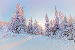 冬天横向 免版税库存照片