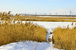冬天横向18 免版税图库摄影