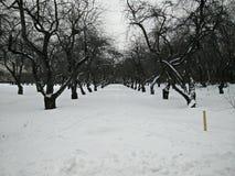 冬天段落 库存照片