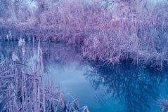 冬天池塘1 免版税图库摄影