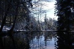 冬天池塘 库存图片