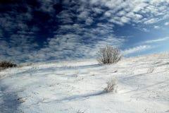 冬天沙漠 库存照片