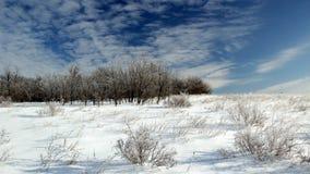 冬天沙漠 免版税图库摄影