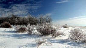 冬天沙漠 图库摄影