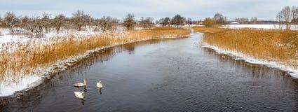 冬天河和浮动天鹅在冬天seasonn 免版税库存图片