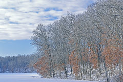 冬天海岸线Eagle湖 库存图片