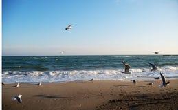 冬天海景在一个晴天 库存图片