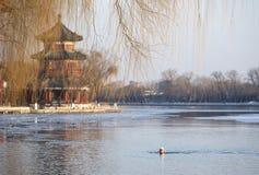 冬天游泳在北京 免版税图库摄影