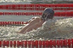 冬天游泳竞争 库存图片