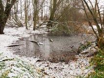 冬天湖背景风景场面12月森林边缘  免版税库存图片