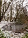 冬天湖背景风景场面12月森林边缘  免版税图库摄影