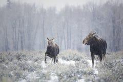 冬天漫步 库存图片