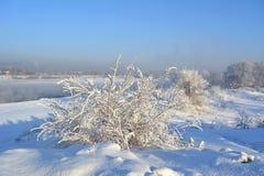 冬天灌木和树在雪在河海岸  美丽的景色 图库摄影
