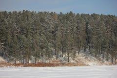 冬天照片 库存图片