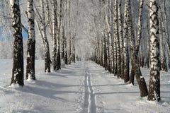 冬天照片  33c 1月横向俄国温度ural冬天 滑雪路在森林里 库存照片