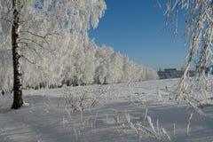 冬天照片  33c 1月横向俄国温度ural冬天 库存图片