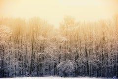 冬天现象:在有雾的冬天森林后的晚上太阳 图库摄影
