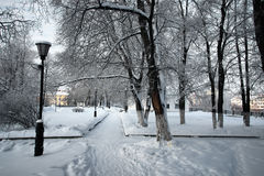 冬天用雪盖的植物的公园分支 免版税库存图片
