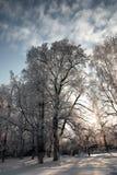 冬天用雪盖的植物的公园分支 图库摄影