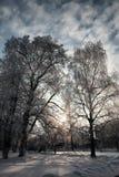 冬天用雪盖的植物的公园分支 库存照片