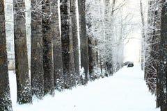 冬天用雪盖的植物的公园分支 免版税库存照片