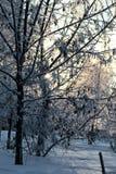 冬天用雪盖的植物的公园分支 免版税图库摄影