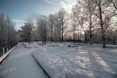 冬天用雪盖的植物的公园分支 库存图片