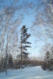 冬天电路在森林里 库存照片